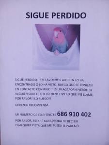 Pájaro perdido